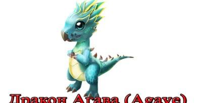 дракон агава