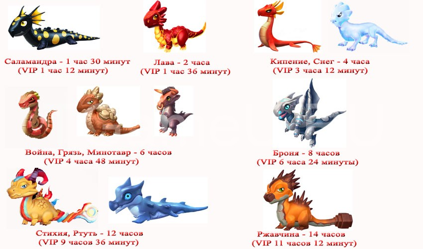 другие драконы при выведении